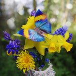 Load image into Gallery viewer, 'Dawn' Butterfly Set Artist Wholesale