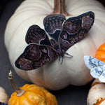 Load image into Gallery viewer, 'Hellebore' Moth Set Reseller Wholesale