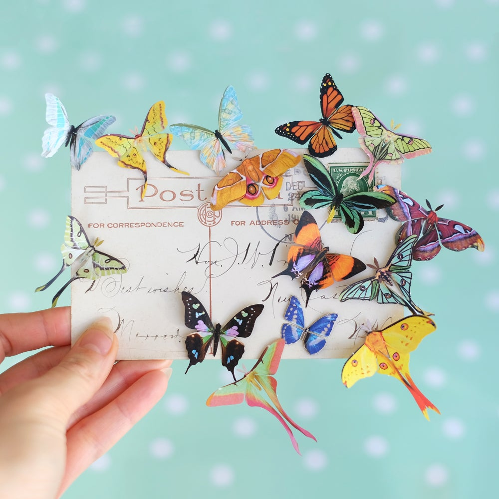 'Summer' Mini Moth Collection Artist Wholesale