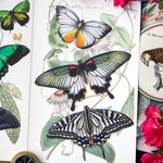 Load image into Gallery viewer, 💫New!💫 'Basra' Butterfly Set Artist Wholesale