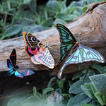 Load image into Gallery viewer, 'Jade' Spanish Moon Moth Set