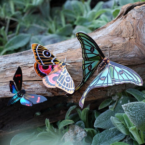 'Jade' Spanish Moon Moth Set