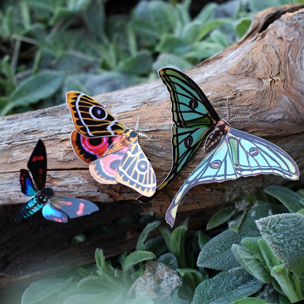 'Jade' Spanish Moon Moth Set Reseller Wholesale
