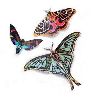 'Jade' Spanish Moon Moth Set Artist Wholesale