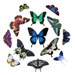 "Load image into Gallery viewer, The Butterfly Collection 2 ""Jewels of the East"""