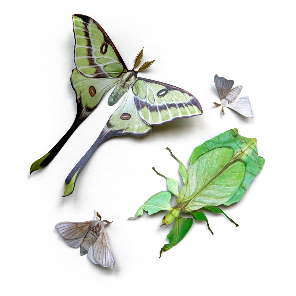 'Leaf' Besanti Moth and Leaf Insect Set