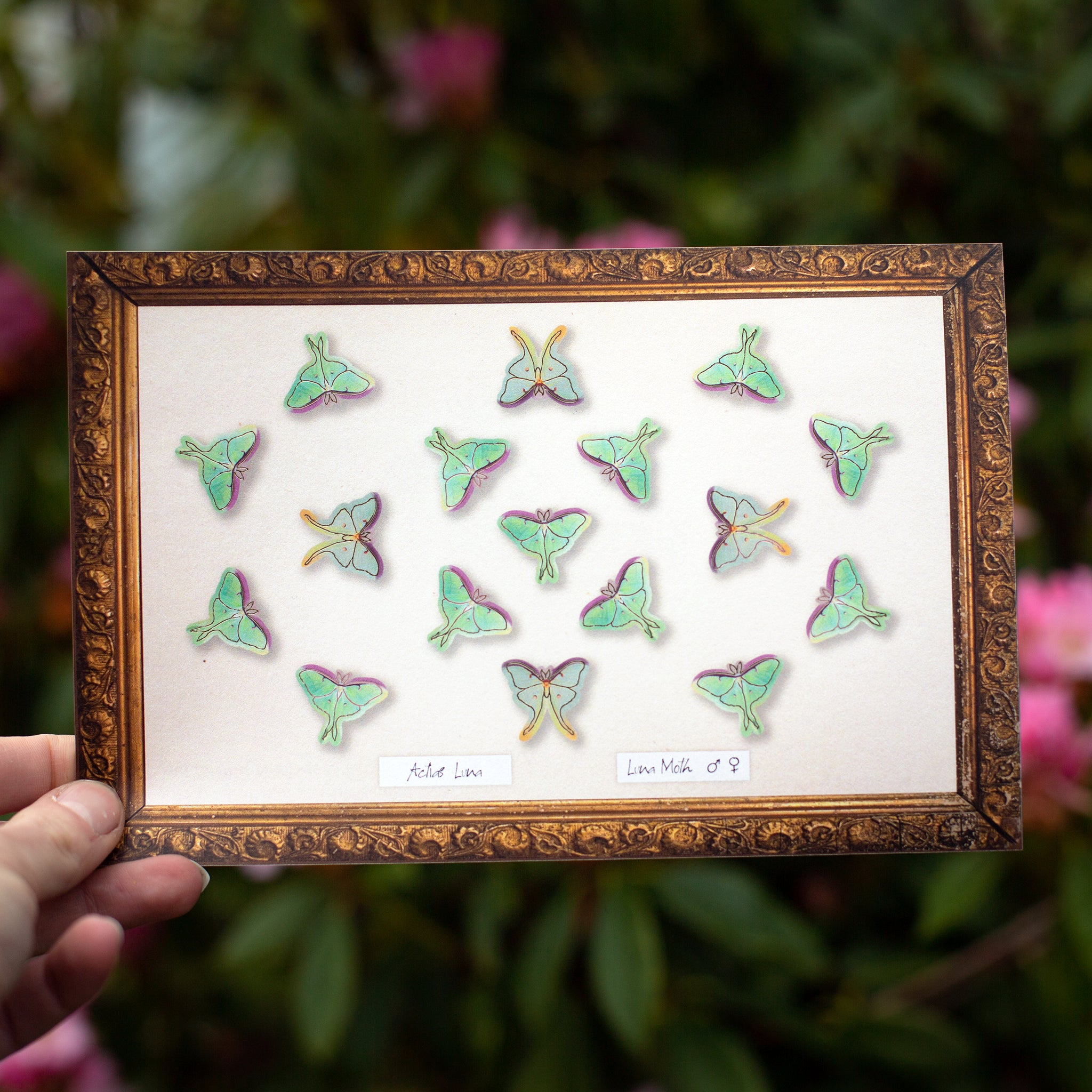 "💫New!💫 'Snowmoon"" Micro Luna Moth Collection"