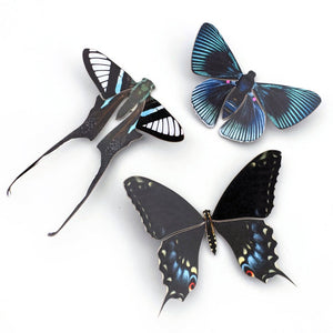'Midnight' Butterfly Set Reseller Wholesale