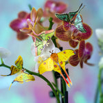 Load image into Gallery viewer, 'Summer' Mini Moth Collection Artist Wholesale