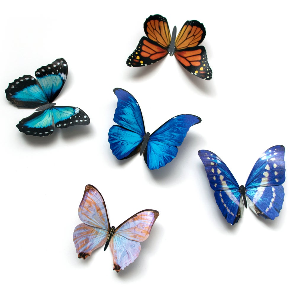 Morphos and Monarch Butterfly Set