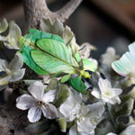 Load image into Gallery viewer, 'Leaf' Besanti Moth and Leaf Insect Set