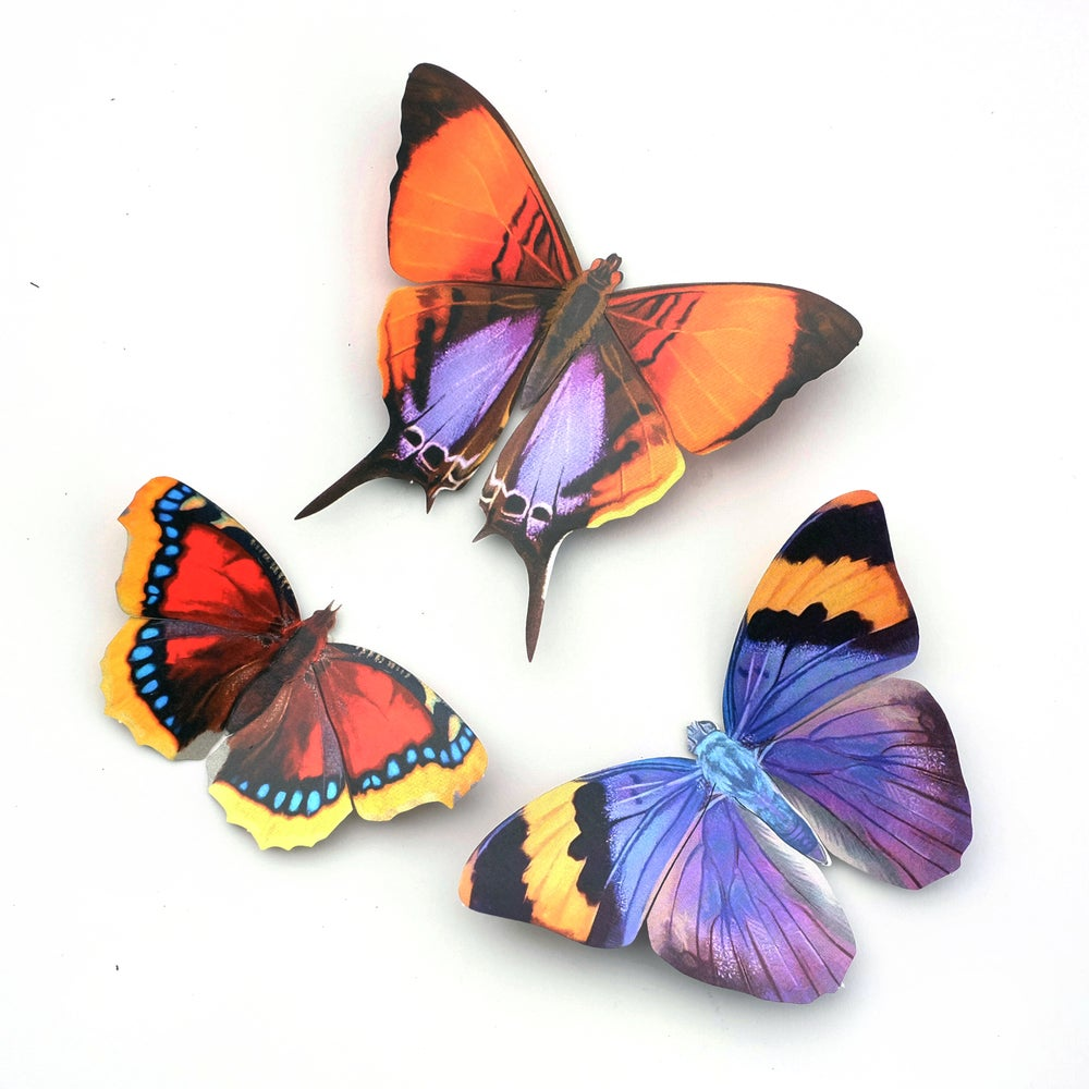 'Sunrise' Butterfly Set