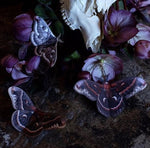 Load image into Gallery viewer, 'Autumn' Cecropia Moth Set Artist Wholesale