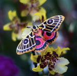 Load image into Gallery viewer, 'Jade' Spanish Moon Moth Set Reseller Wholesale