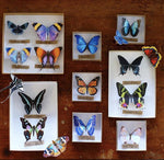 Load image into Gallery viewer, 'Sunrise' Butterfly Set Artist Wholesale