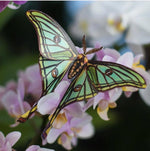 Load image into Gallery viewer, 'Jade' Spanish Moon Moth Set Artist Wholesale