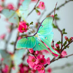 Load image into Gallery viewer, 'Spring' Luna Moth Set Reseller Wholesale