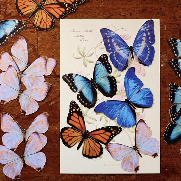 Morphos and Monarch Butterfly Set 1