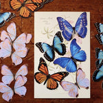 Load image into Gallery viewer, The Morpho & Monarch Butterfly Multi-Pack
