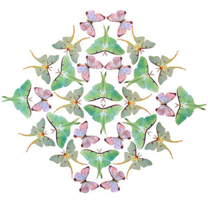 Luna Moth Multi-Pack