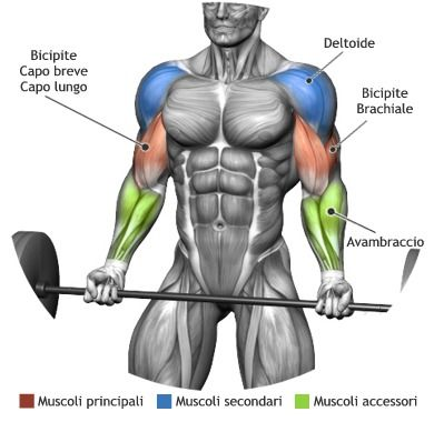 barbell muscle work