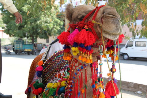Decorated Camel from India; photo by WomanShopsWorld