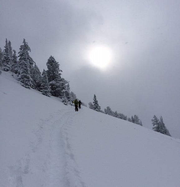Skinning up Beartrap Canyons Backcountry