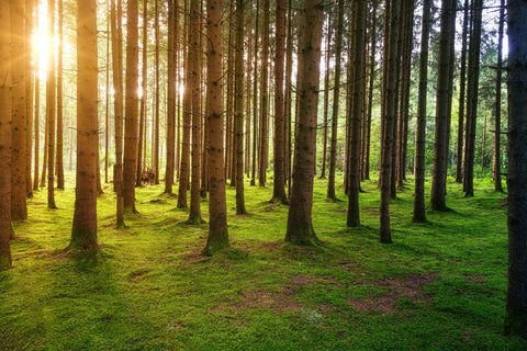 Woodlands and forests