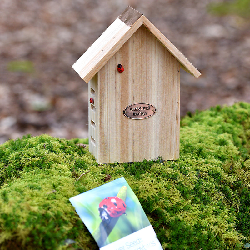 Ladybird Lodge & Flower Seeds