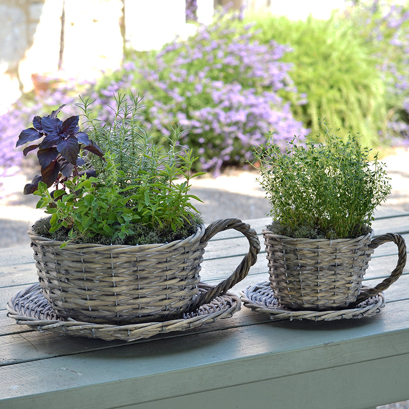 2 Willow Teacup Planters