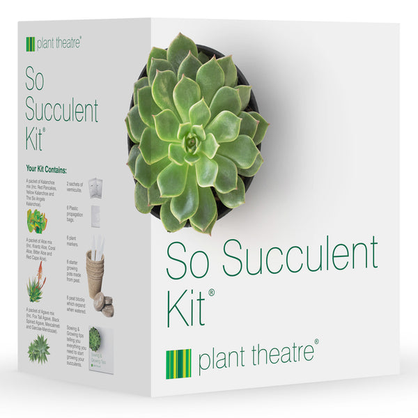 So Succulent Kit