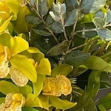 Load image into Gallery viewer, Citrus yellow Orchid in Australian foliage