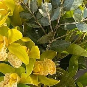Citrus yellow Orchid in Australian foliage
