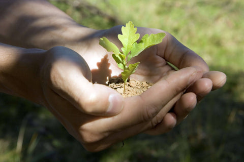 Tree Sapling In Hands