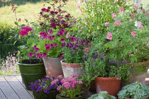Variety Of Garden Plants In Pots