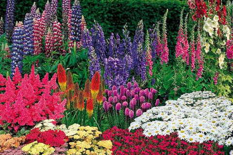 Colourful Garden Plants