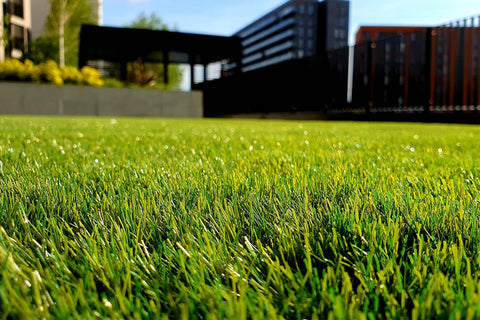 Green Grass In The Garden