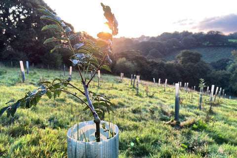 Growing Trees At Cusgarne Farm