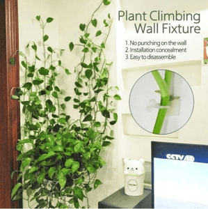 Plant Climbing Wall Fixtures 1688