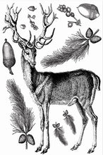 "Load image into Gallery viewer, Winter Stag - 6"" x 8"" Polymer Stamp Sheet"