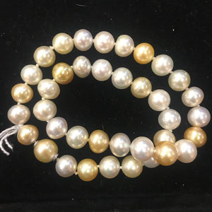 DB181308 / Integrated Clasp 38pcs Gold South Sea Pearls