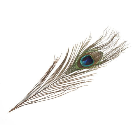 Peacock Feathers Pack of Two