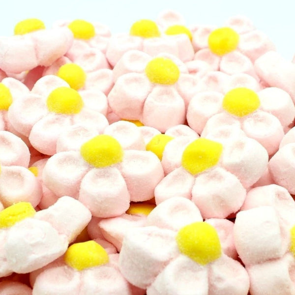 MARGHERITE ROSA  MARSHMALLOW