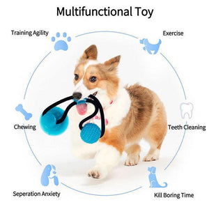 Dogs Chew Toy