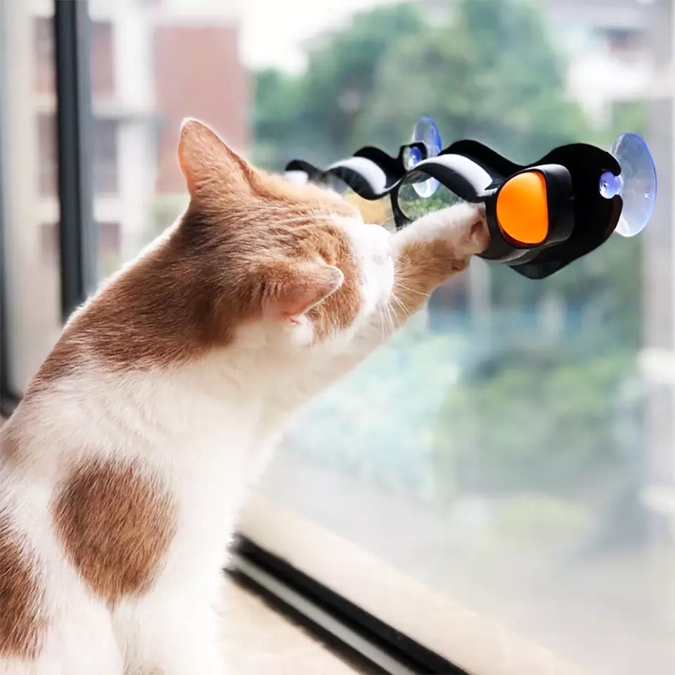 Window Mounted Cat Toy With Ball