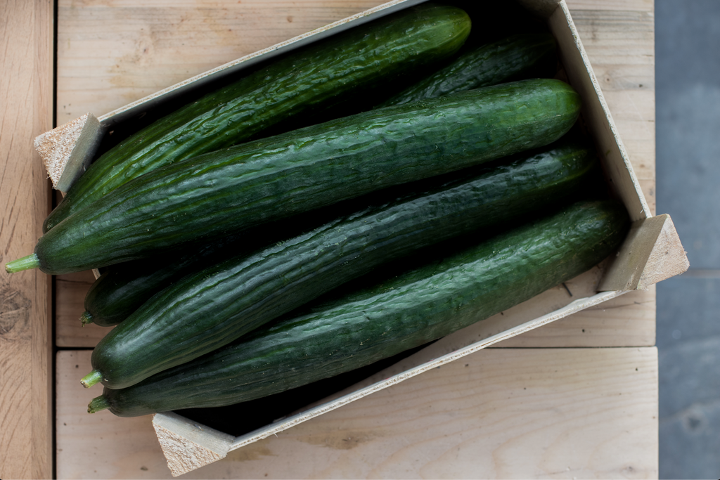 CUCUMBER - Bens Greengrocers