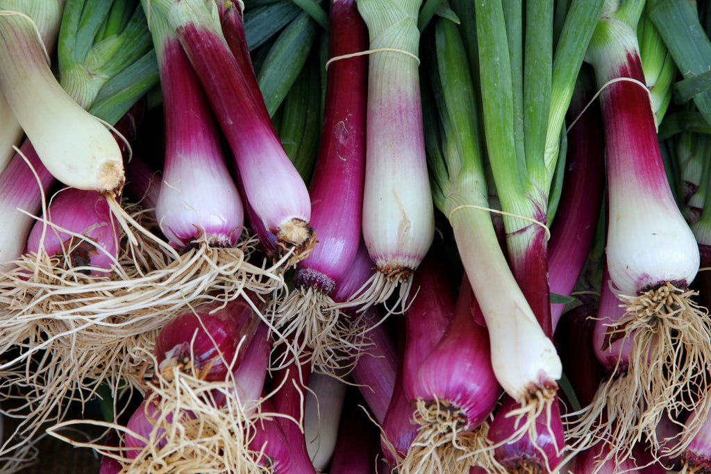 SPRING ONIONS (RED) - Bens Greengrocers