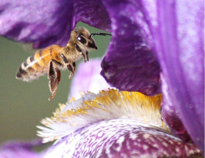 Bees & Sustainability – Sat 28 Aug 2021