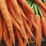 Load image into Gallery viewer, Organic carrots