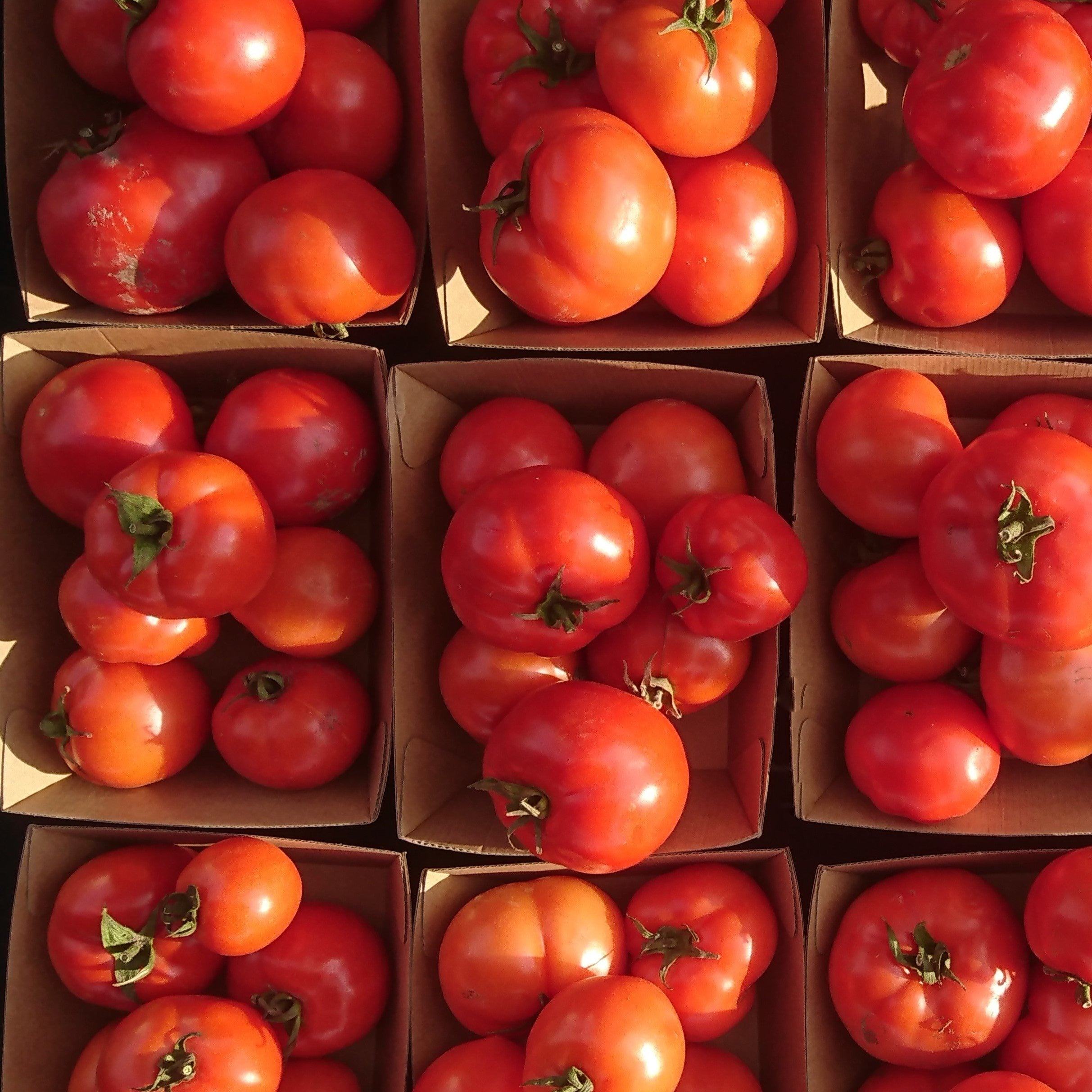 Organic Tomatoes - Untamed Earth